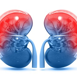Image for Diabetes and Kidneys